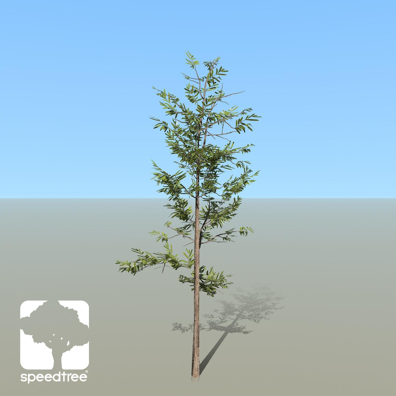 Willow Oak Species Pack