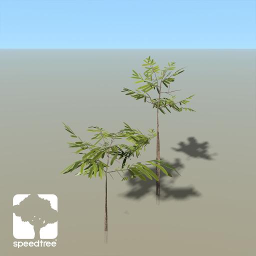 WillowOak_seedling
