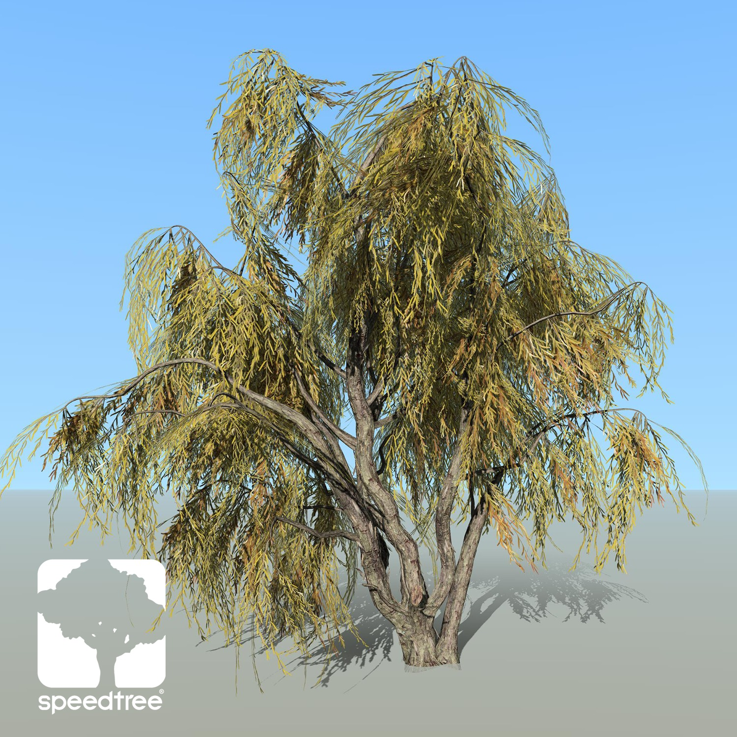 Peppermint Willow Species Pack