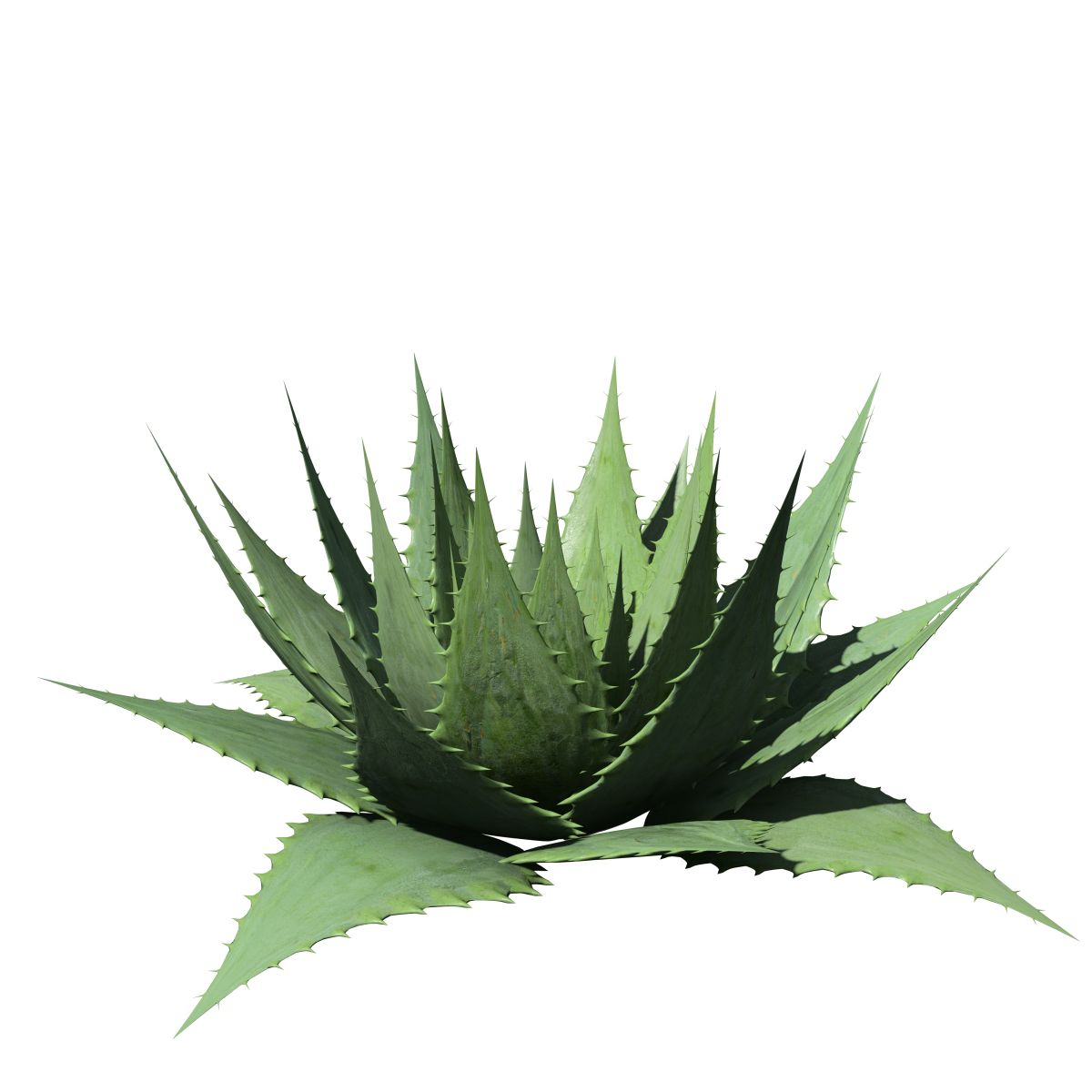 aloe vera species pack speedtree. Black Bedroom Furniture Sets. Home Design Ideas