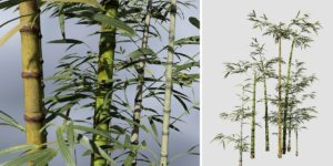 Bamboo: Common