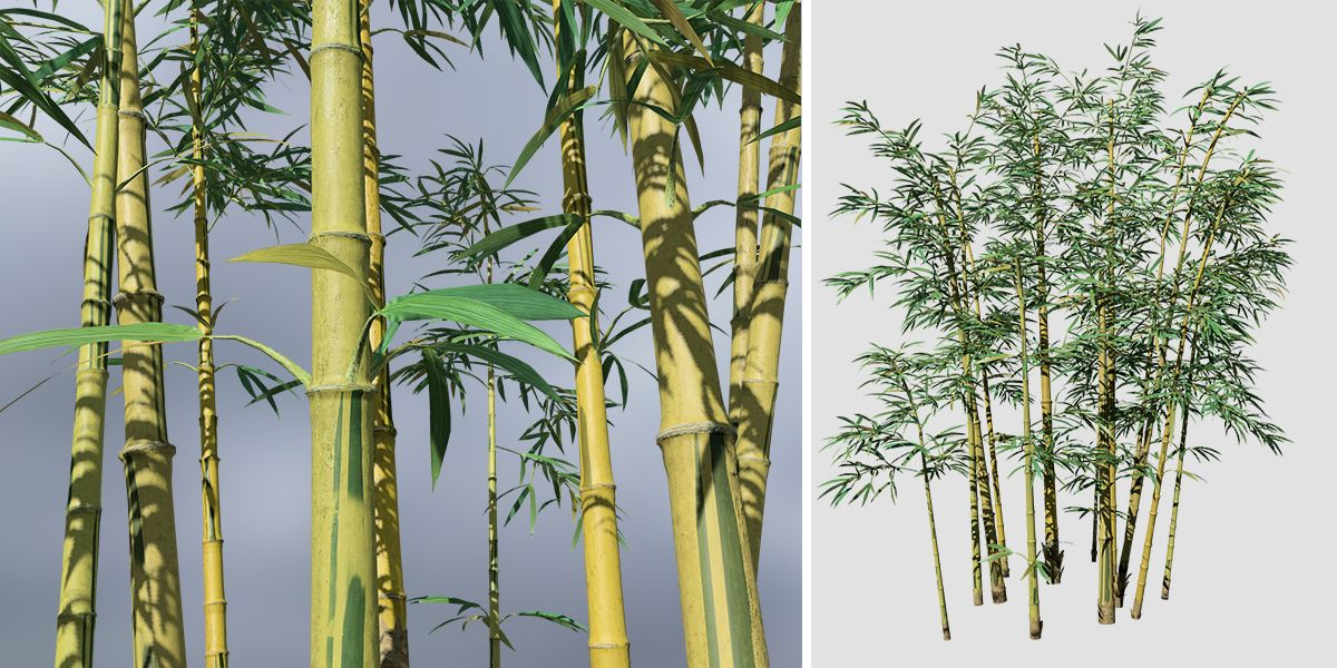 Bamboo Yellowgroove Store Tree Water