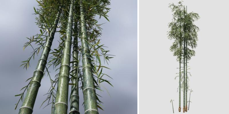 Bamboo Species Pack