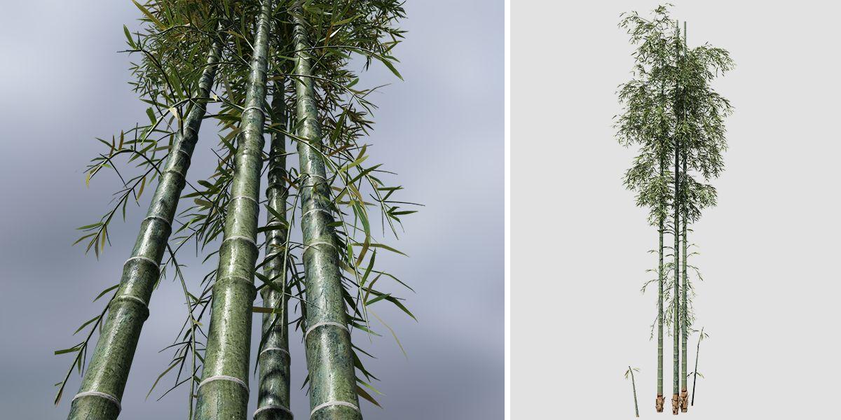 Bamboo Species Pack Speedtree