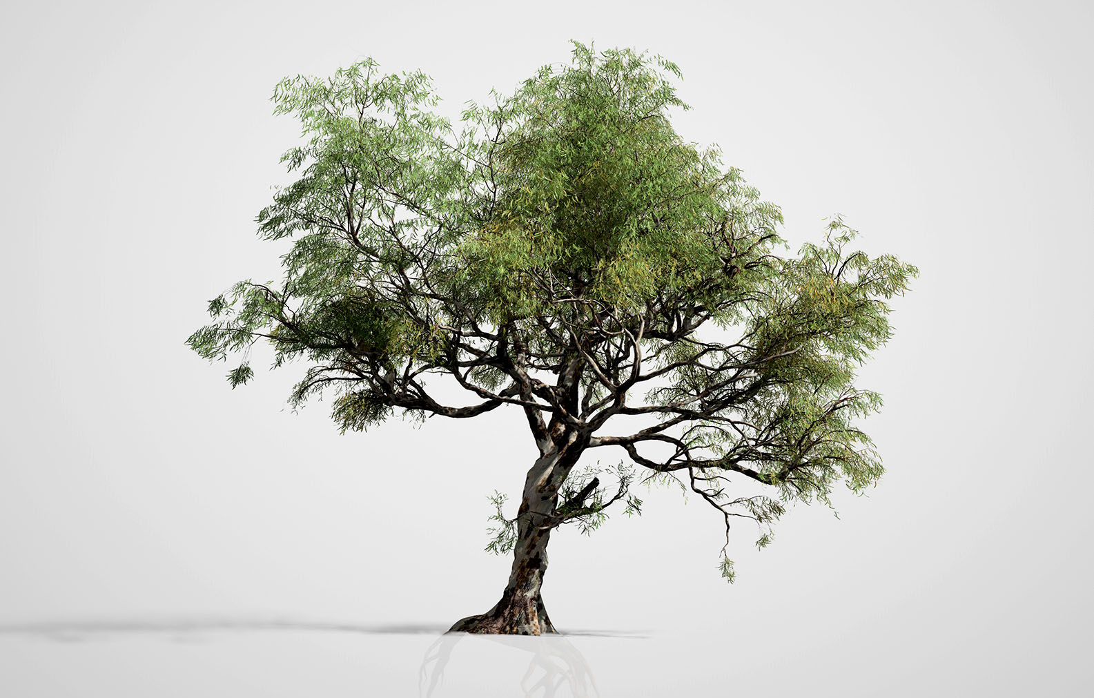 SpeedTree Cinema 8 Evaluation – SpeedTree