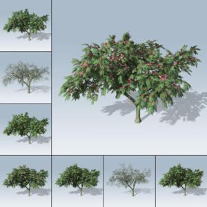 Mimosa (Games v7)