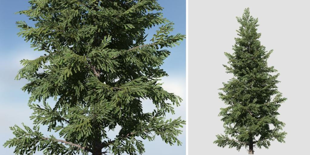 Norway Spruce Species Pack