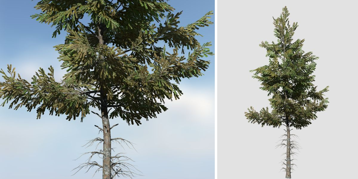 norway_spruce_product_hero_forest_2