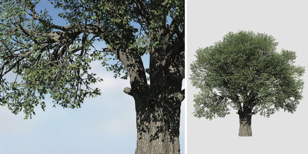 White Oak Species Pack