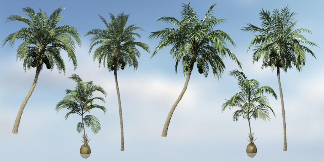 Coconut Palm Species Pack Sdtree