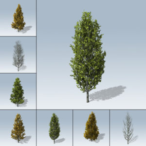 Cypress Oak