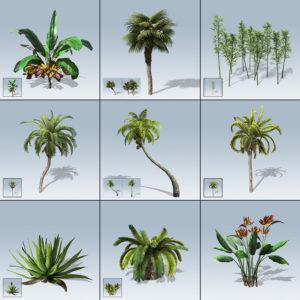 Desktop Palm & Tropical Package