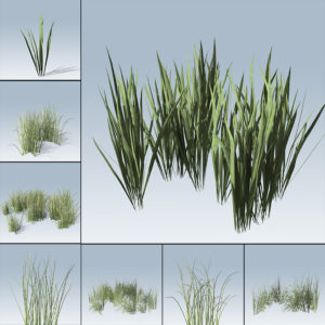 Rough Grass