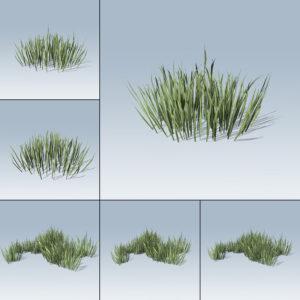 Thick Grass