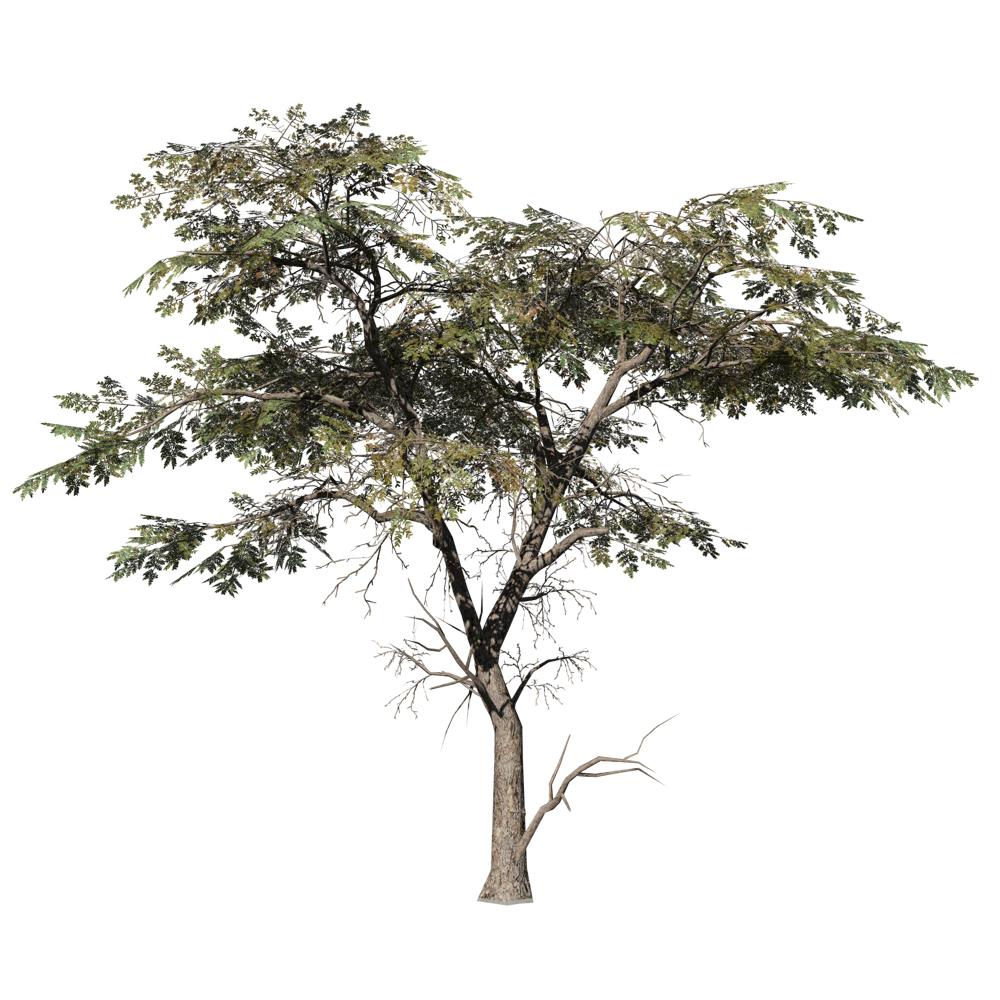 Acacia: Desktop Forest