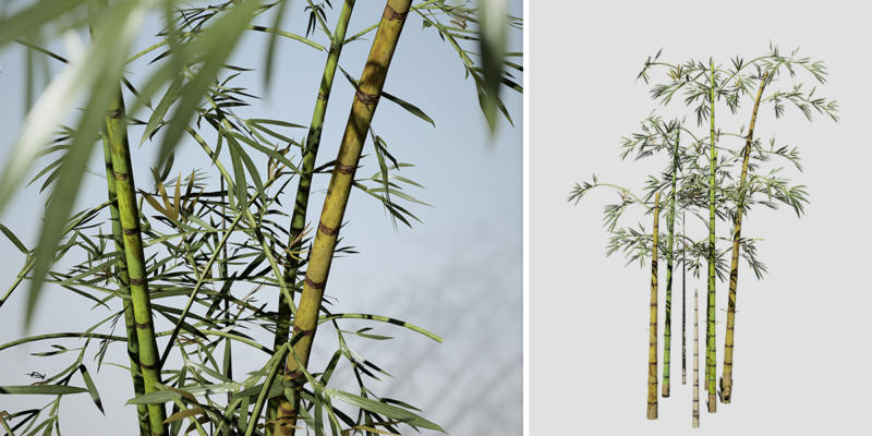 Bamboo: Desktop (Common)