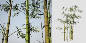 Bamboo: Hero (Common)