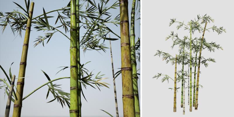 Bamboo: Hero (Common)