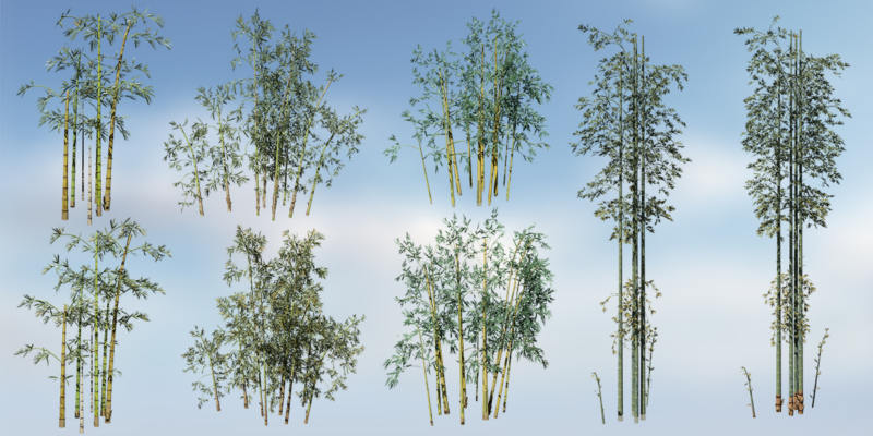 Bamboo Species Pack (Games 8)