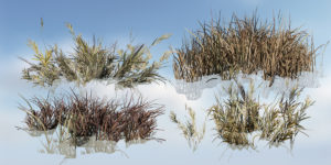 Bushy Bluestem Grass: Desktop Pack