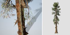 Sierra Redwood: Desktop Field