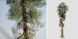 Sierra Redwood: Hero Field