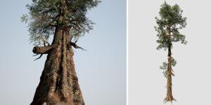 Sierra Redwood: Hero Forest