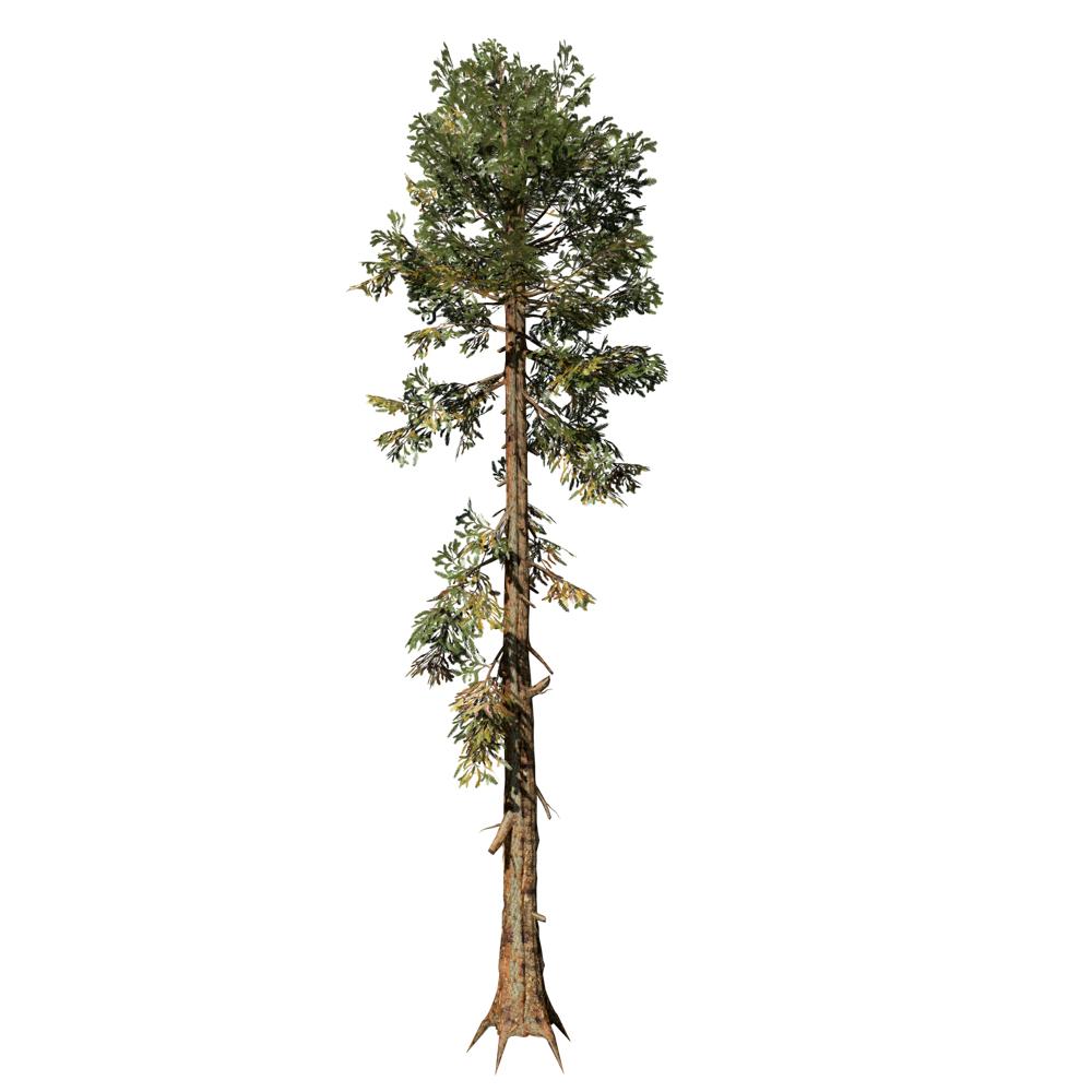 Sierra Redwood: Desktop Forest