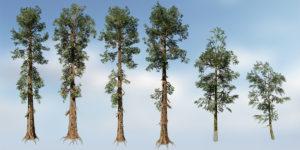 Sierra Redwood Species Pack