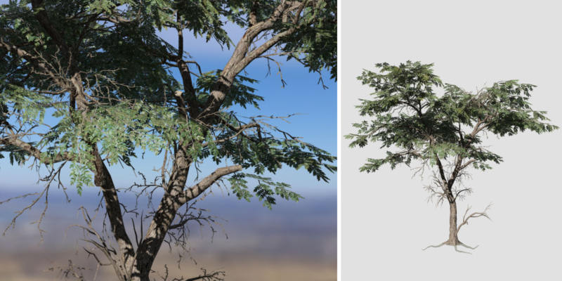 Acacia: Hero Forest