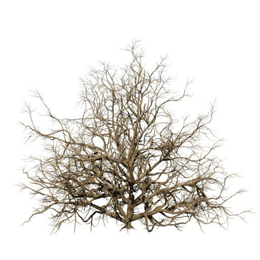 Azalea: Hedge 3