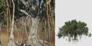 Banyan: Forest