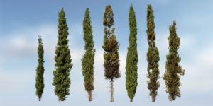 Italian Cypress Species Pack