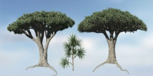 Dracaena Species Pack
