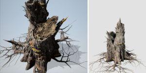 Elm Stump: (Split)