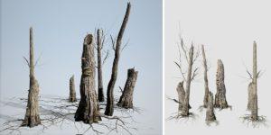 Elm Stumps: (Cluster)