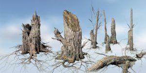 Elm Stump Species Pack