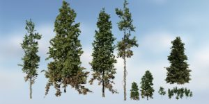 Douglas Fir Species Pack