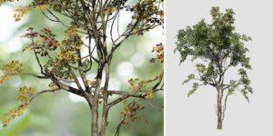 Alder: Desktop Forest