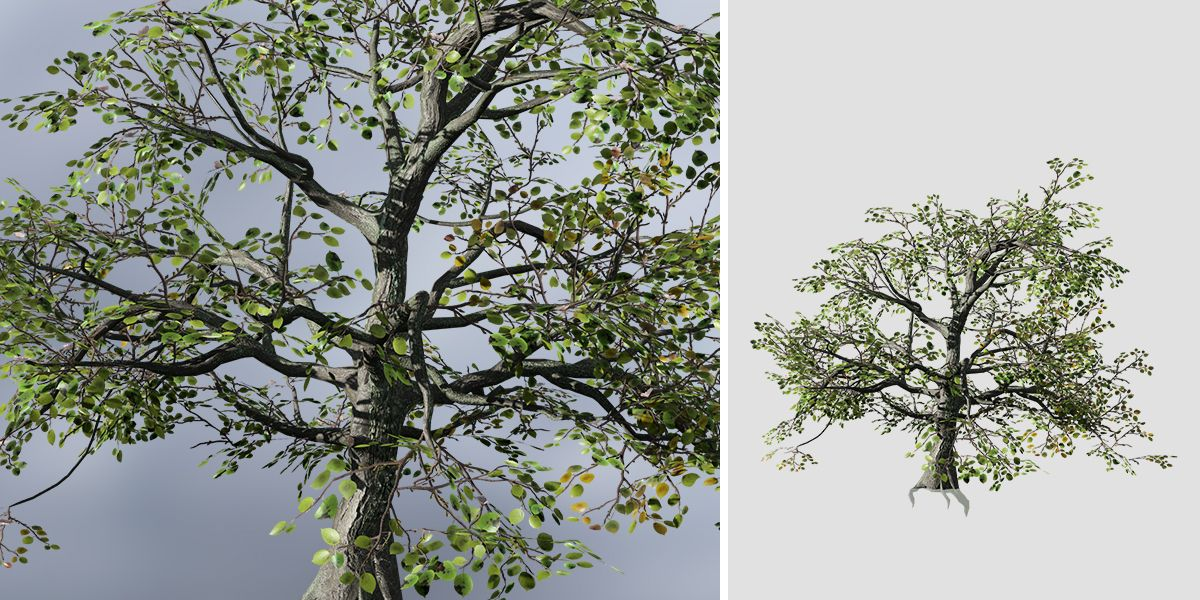 Apple: Desktop Forest