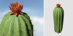Barrel Cactus: Desktop (Tall)