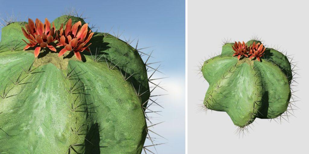 Barrel Cactus: Desktop (Short)