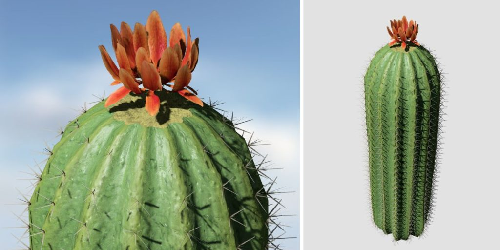 Barrel Cactus: Hero (Tall)
