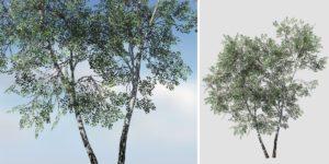 Paper Birch: Desktop Forest