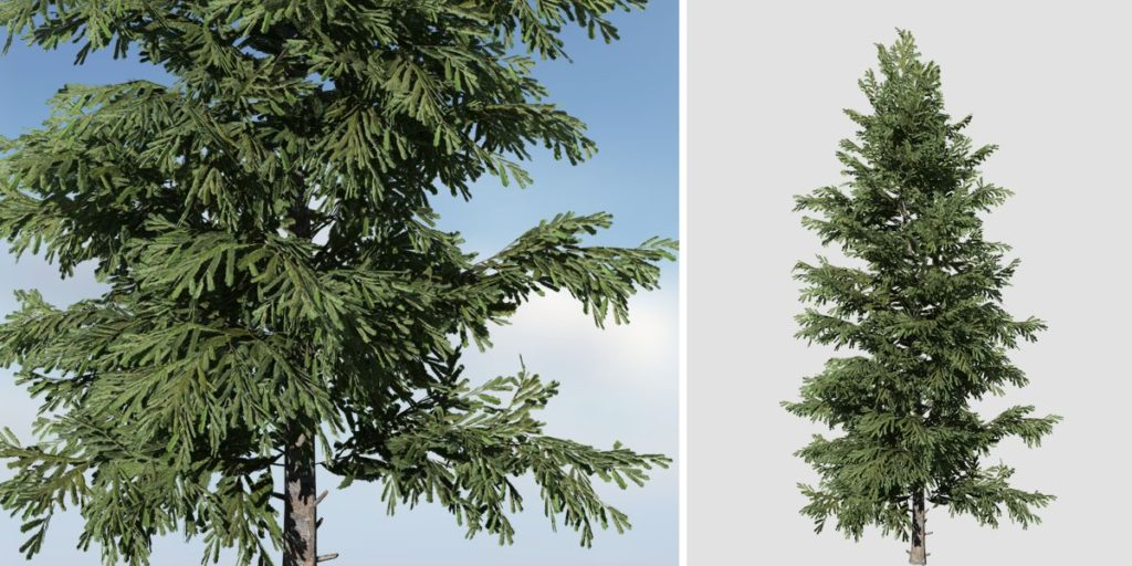 Norway Spruce: Hero Forest (Sparse)