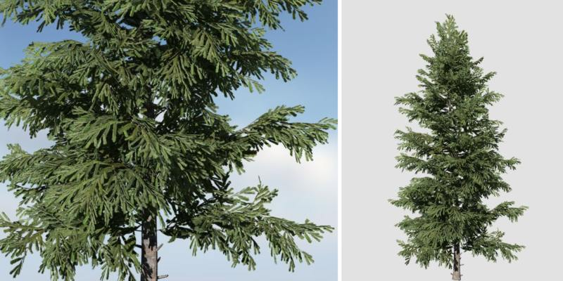 Norway Spruce: Desktop Forest (Full)