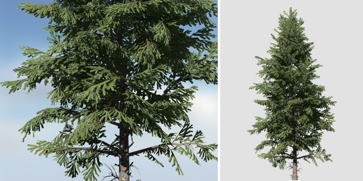 Norway Spruce: Hero Forest (Full)