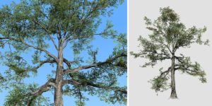 Willow Oak: Desktop Forest