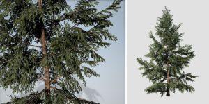 White Spruce: Desktop Forest
