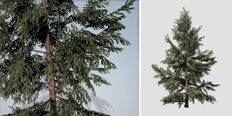 White Spruce: Desktop Forest